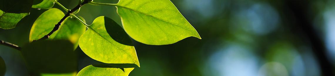 prodotti a basso impatto ambientale
