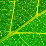 prodotti e servizi green costo