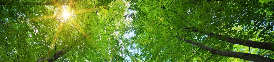 impronta ambientale sostenibilità prodotti