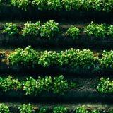 Impatti ambientali settore agroalimentare