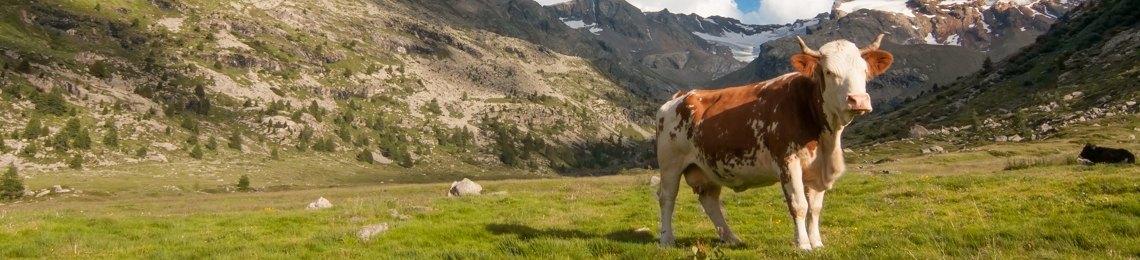 produzione formaggio sostenibile