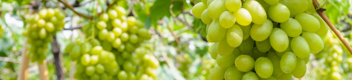 produzione vino sostenibile